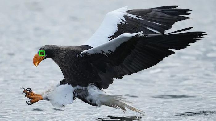 即時鳥眼追蹤對焦12